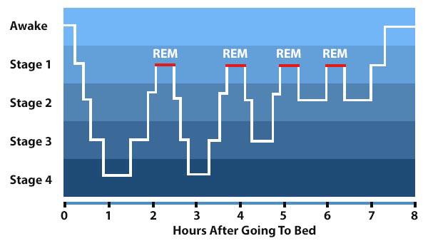 sleeping cycles graph